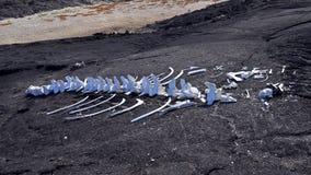 Whale bones Stock Images