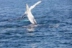 Whale, cape cod Stock Photos