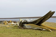 Whale carcass Stock Photo