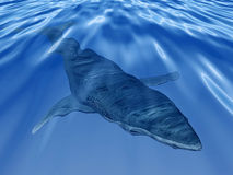 Whale in the deep blue sea vector illustration
