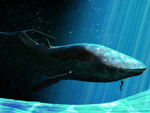 Whale and diver. A diver caresses a great whale royalty free illustration