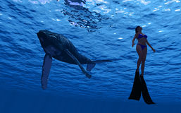 Whale and diver Stock Photo