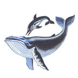 Whale and dolphin. Hand drawing watercolor Stock Images