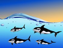 Whale family in the ocean. Illustration of whale family in the ocean Stock Photography