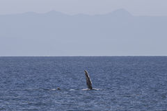 Whale fin Royalty Free Stock Images