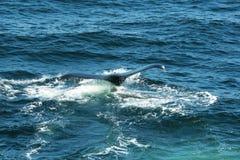 Whale fluke Stock Images