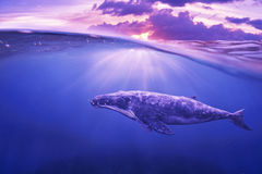 Whale in half air. Half sky Royalty Free Stock Photos