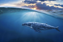 Whale in half air. Half sky royalty free stock photo
