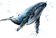 Whale. Humpback whale watercolor illustration. Stock Photo