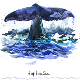 Whale. Humpback whale watercolor illustration. Stock Image