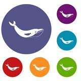Whale icons set. In flat circle red, blue and green color for web Stock Images