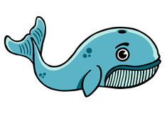 Whale illustration. Blue whale cartoon illustration vector design drawing Royalty Free Stock Image