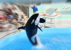 Whale Jumping. At zoo stock photo