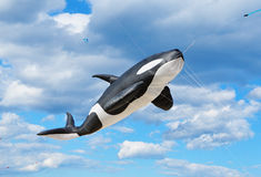 Whale Kite. In the blue sky on festival of the wind stock photo