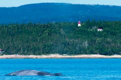 Whale lighthouse forest sea. Whale close to shore, lighthouse and forest island and mountains stock photo