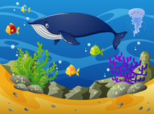 Whale and little fish under the sea. Illustration Stock Images