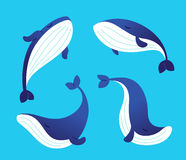 Whale - modern vector set of flat illustrations. Royalty Free Stock Image