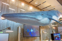 Whale Museum Museu da Baleia, Canical, Madeira Royalty Free Stock Photo