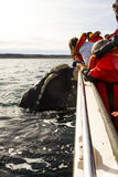 Whale near the  boat Stock Photography