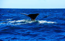 Whale, New Zealand Stock Photography