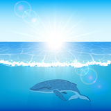 Whale in ocean Stock Photos