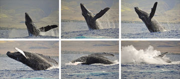 Whale photo sequence stock photos