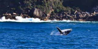 Whale Rocks Royalty Free Stock Photo