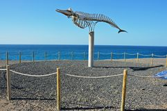 A whale`s skeleton in El Cotillo stock images