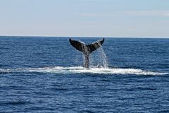 Whale's Tail stock photography