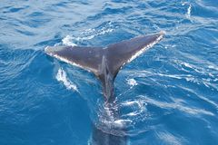 A whale's tail Stock Photos