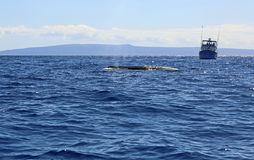 Whale's watchers. Whale's observation near Maui, Hawaii stock images