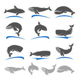 Whale set. Vector Royalty Free Stock Photos