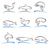 Whale set. Vector Royalty Free Stock Photography