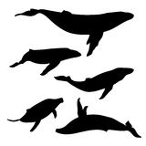 Whale set vector. Whale set of silhouettes vector stock illustration