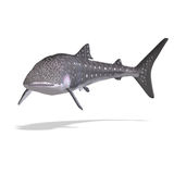 Whale shark. 3D render with clipping path and shadow over white Stock Image