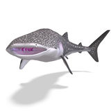 Whale shark. 3D render with clipping path and shadow over white Royalty Free Stock Photos
