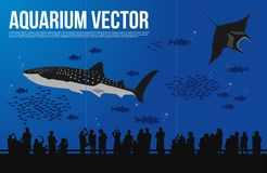 Whale Shark in aquarium vector. vector illustration