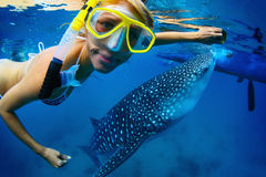 Whale shark. Close up underwater shoot of a young lady snorkeling with gigantic whale shark Stock Photography