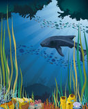 Whale shark and coral reef. stock illustration