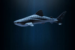 Whale shark in deep sea.  royalty free stock images