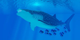 Whale Shark Feeding Stock Image