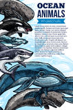 Whale and shark ocean animal sketch poster. Whale and shark ocean animal poster. Blue and sperm whale, killer whale or orca, grey reef and hammerhead shark Royalty Free Stock Photo