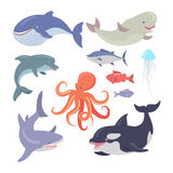 Whale, Shark, Octopus, Seals, Jellyfish, Salmon. Sea life creatures vector set. Whale, shark, octopus, seals, jellyfish, hake, salmon, dolphin. Sea cartoon Royalty Free Stock Image
