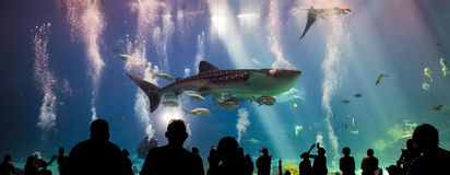 Whale sharks and many kinds of fish swimming in aquarium Stock Photo