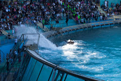 Whale Show Royalty Free Stock Photography