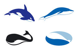 Whale silhouette. Vector silhouette of different whales, silhouette illustration Royalty Free Stock Photography