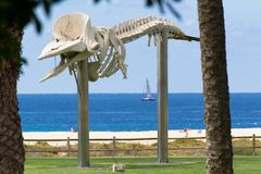 The whale skeleton in Morro Jable- Fuerteventura, Canary Islands Royalty Free Stock Photography