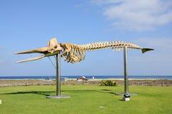 Whale skeleton on Fuerteventura Stock Photo