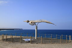 A whale skeleton in Fuerteventura, Canary Islands Stock Photos