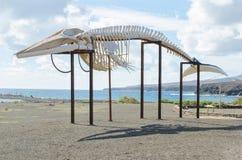 Whale skeleton. Horizontal photo, Fuerteventura, Canary island Royalty Free Stock Images